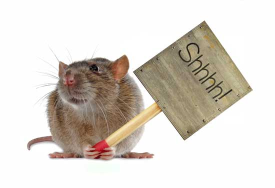 Be as quiet as a rat