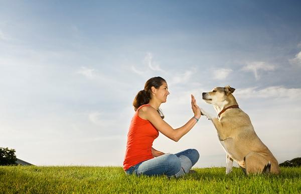 You CAN Teach an Old Dog New Tricks